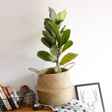 wicker planter with green plant