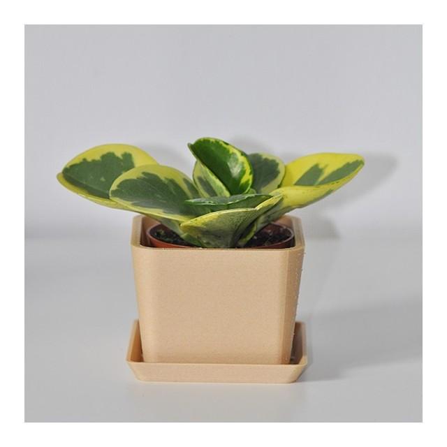 Single square pot - 1