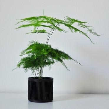 Bao - Design wooden pot - 2