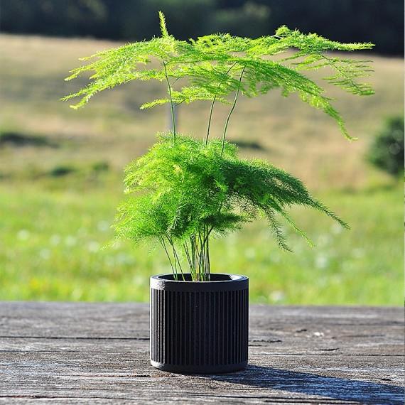 Bao - Design wooden pot - 4