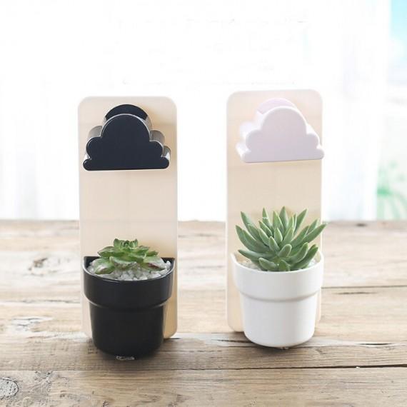 Plante à faire pousser chez soi - 4