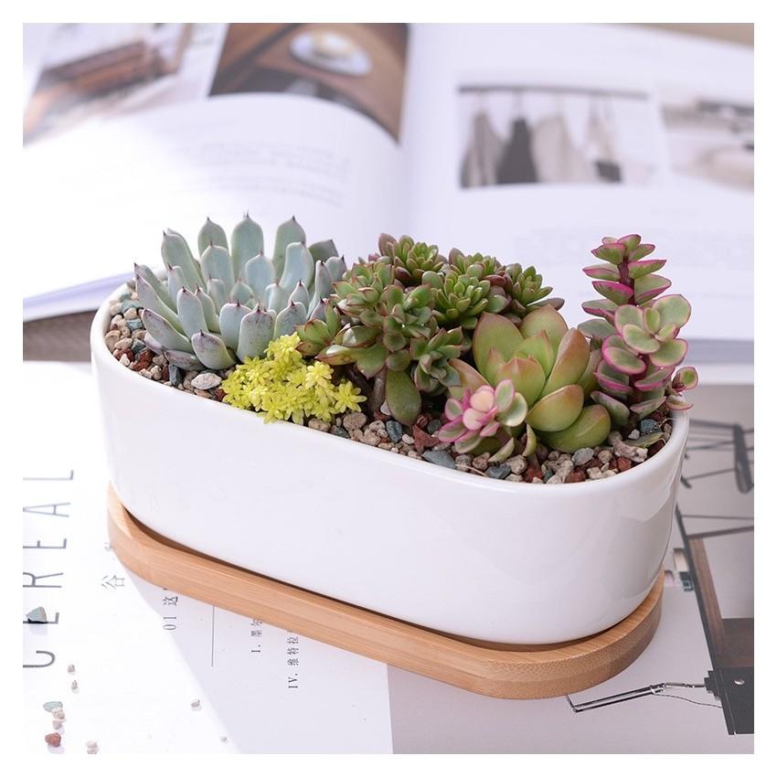 Elongated ceramic pot - 1