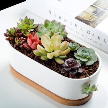 Elongated ceramic pot - 6