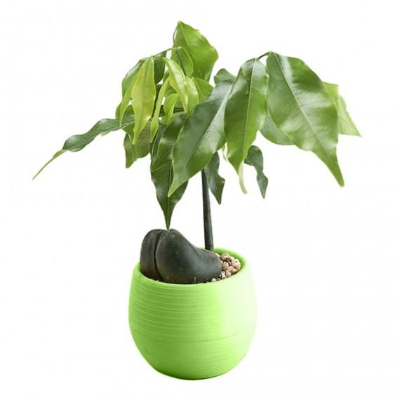 Pot malin avec son réservoir d'eau - Cache pot pas cher - 4