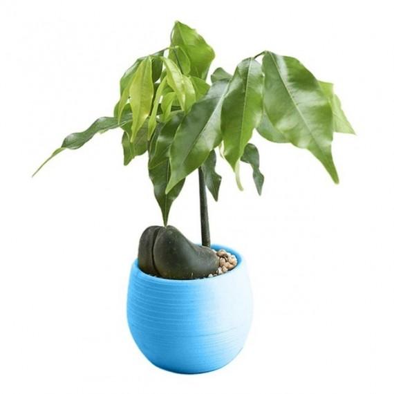 Pot malin avec son réservoir d'eau - Cache pot pas cher - 5