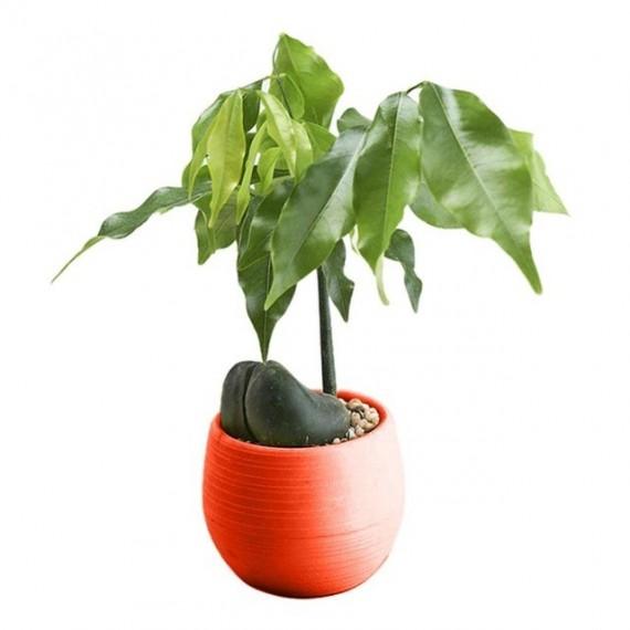 Pot malin avec son réservoir d'eau - Cache pot pas cher - 6