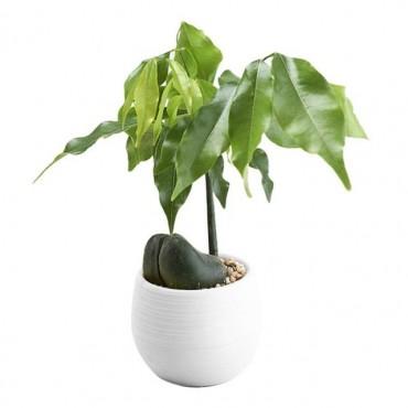 Pot malin avec son réservoir d'eau - Cache pot pas cher - 7