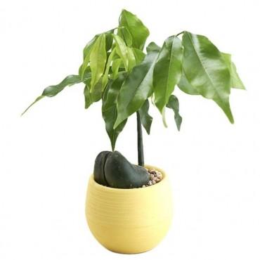 Pot malin avec son réservoir d'eau - Cache pot pas cher - 8