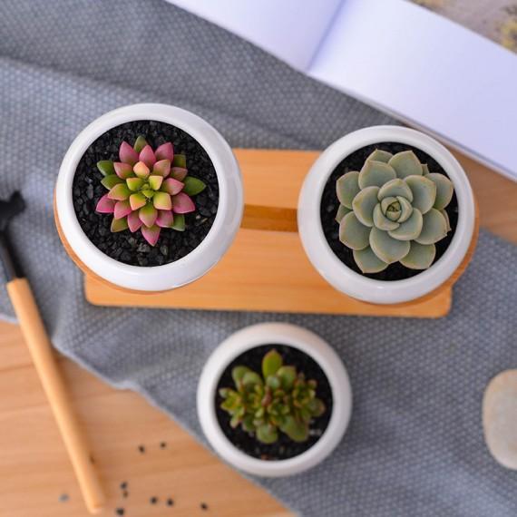 3 Scandinavian decorative pots and wooden base - 4