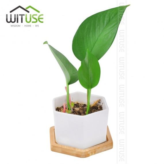 Soucoupe pour pot de fleur - 2